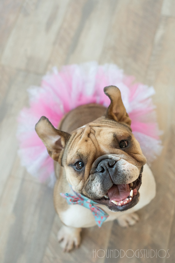 Dog-Friendly-Denver-Photo-Studio-For-Rent-Colorado-Rental-Photography-Studio-Photographer-Studio-for-Rent-Hound-Dog-Studios