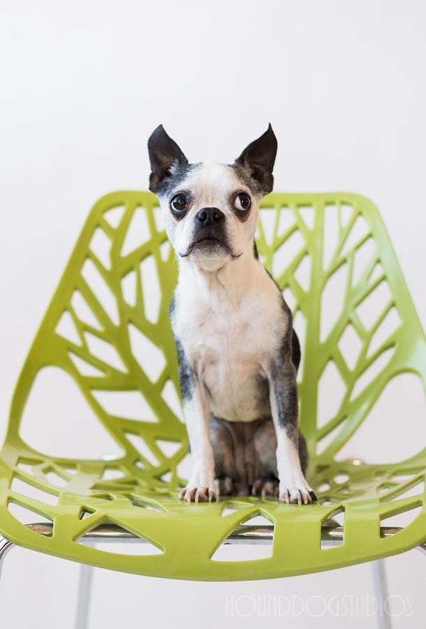 Denver-Photo-Studio-For-Rent-Colorado-Rental-Photography-Studio-Photographer-Studio-for-Rent-Hound-Dog-Studios