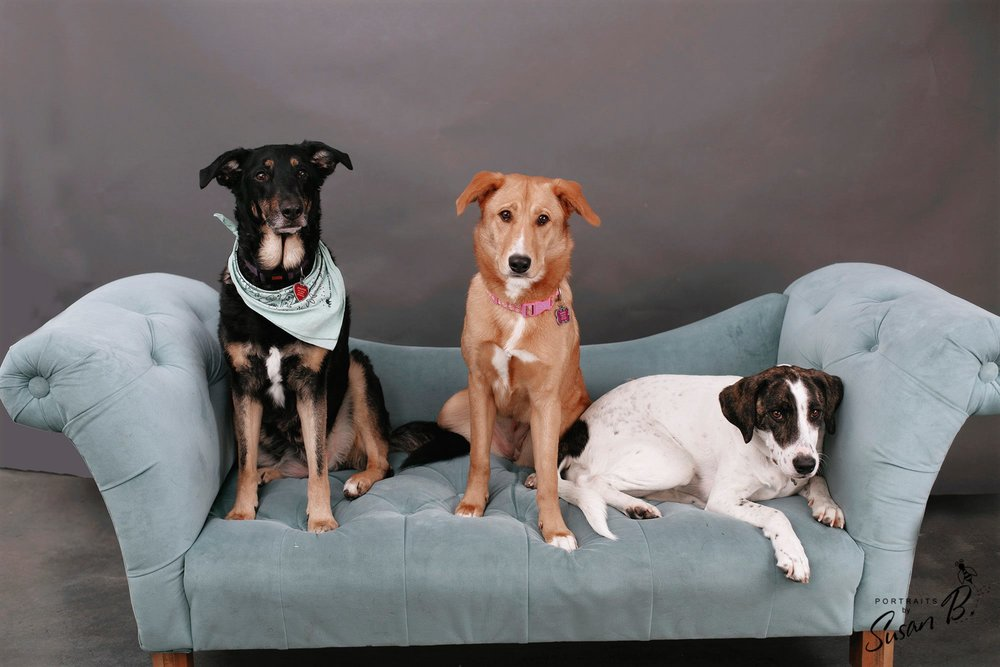 Dog-Friendly-Denver-Photo-Studio-For-Rent-Natural-Light-Portrait-Studio-Denver-Photography-Studio-RiNo-Photo-Studio-Denver-Photographer-Studio