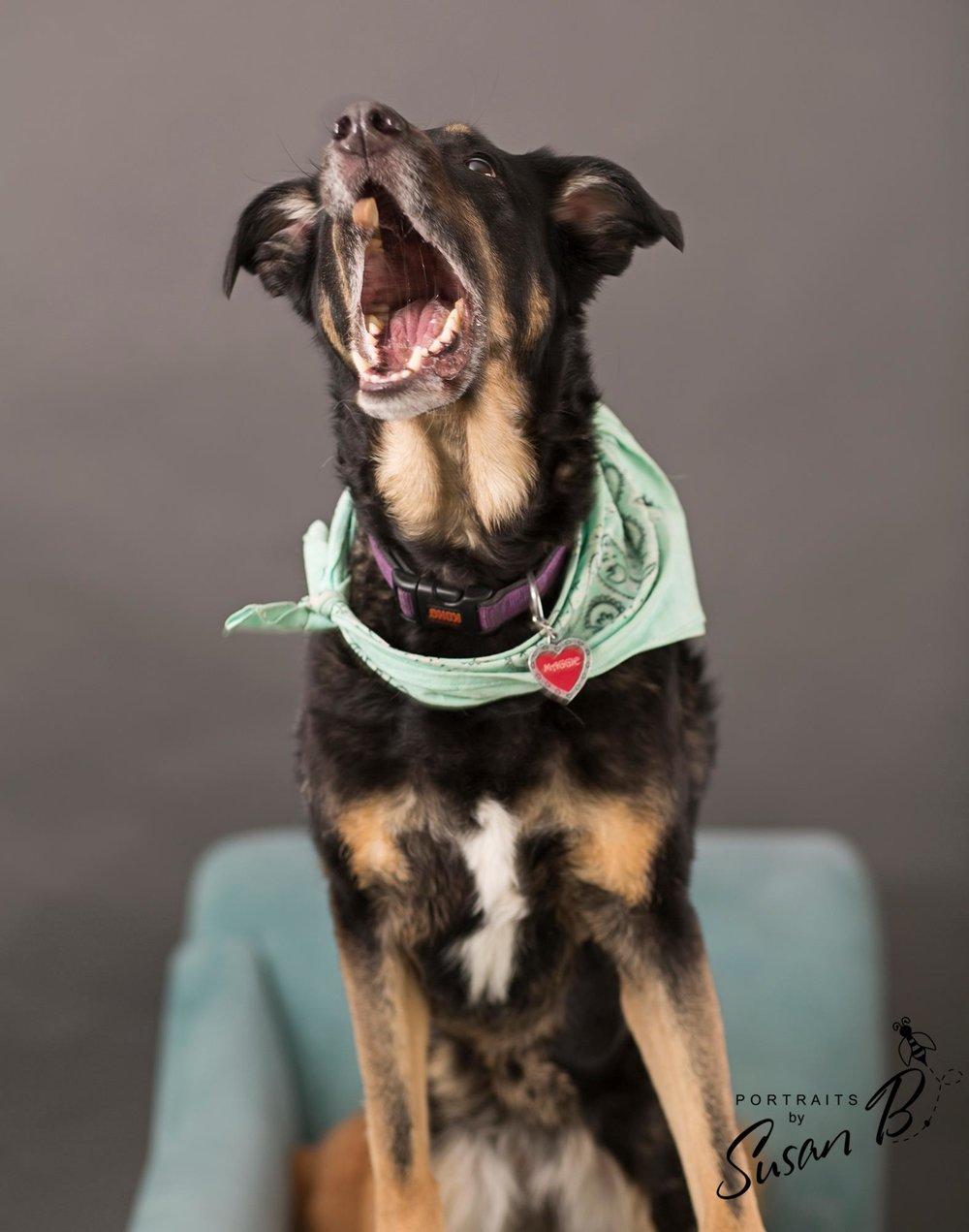 Dog-Friendly-Denver-Photo-Studio-For-Rent-Natural-Light-Portrait-Studio-Denver-Photography-Studio-RiNo-Photo-Studio-Denver-Photographer-Studio.jpg
