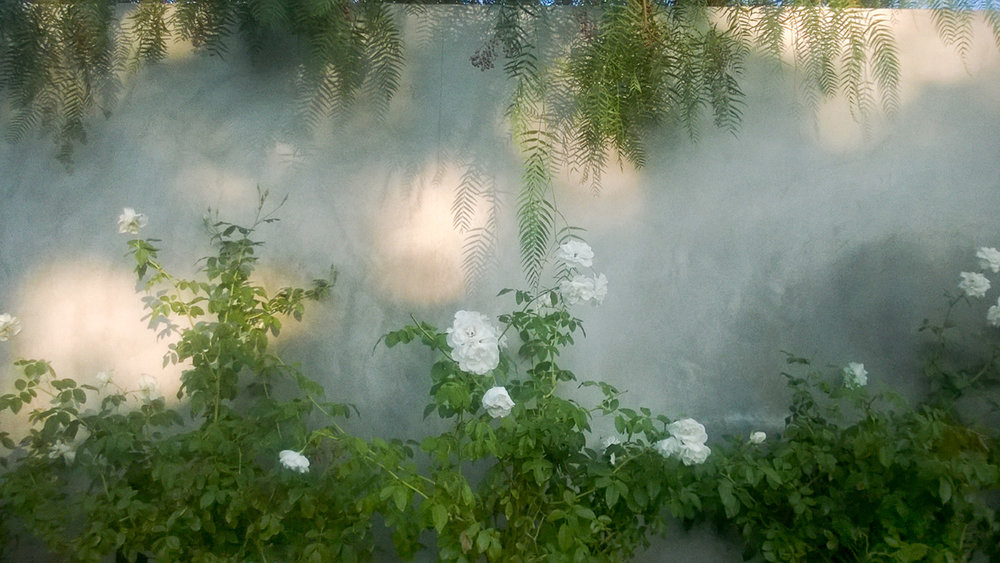 Rose wall.jpg