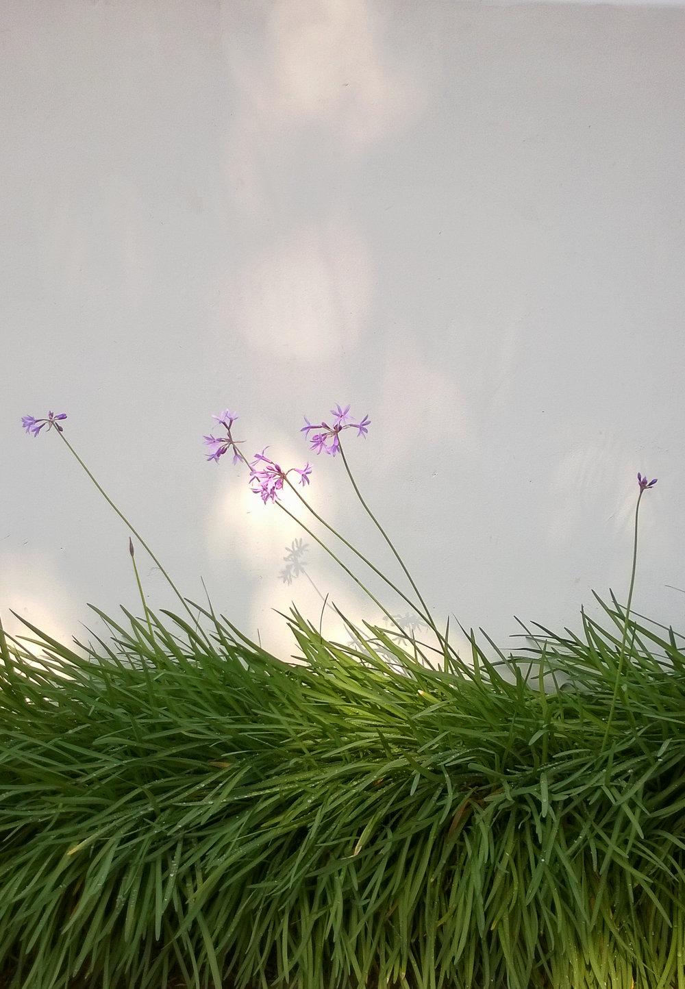 Japanese flower dance.jpg