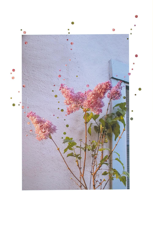 4 Lilacs, 2 Lights