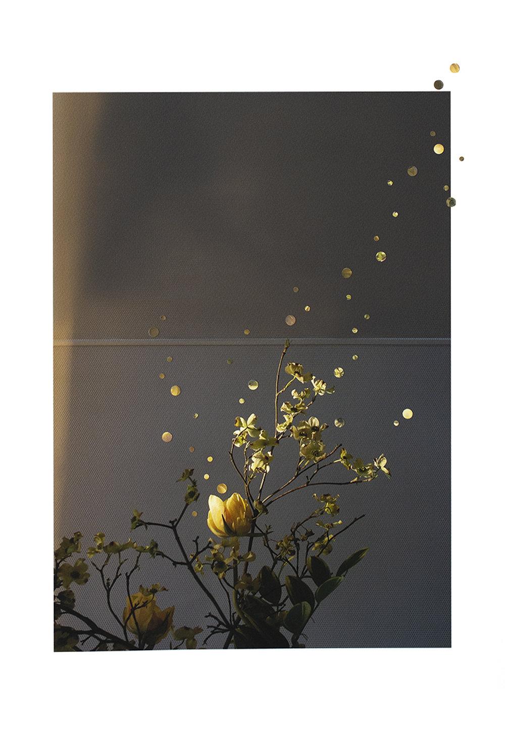 MOMA Flowers