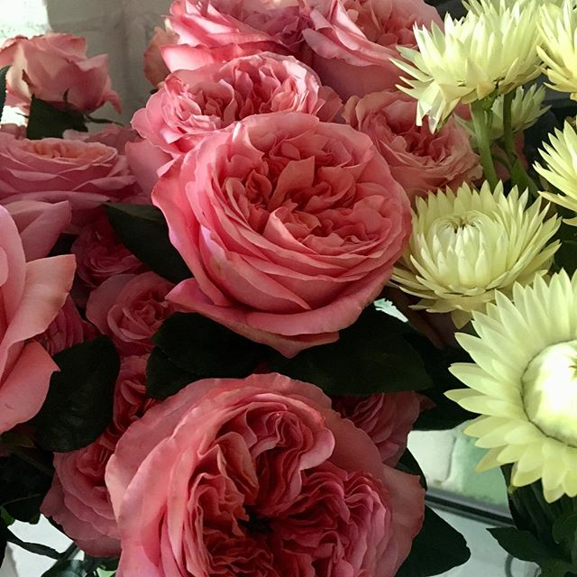 Gorgeous new rose .In store today .