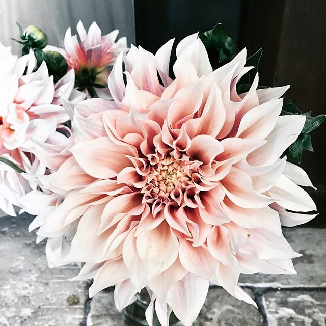 New release dahlia . Tis stunning and in store now