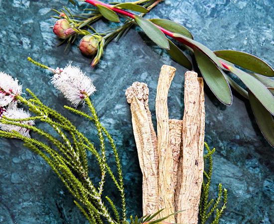 herbs_image_2.jpg