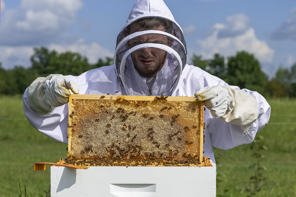 Andrew Cain checks hives preparing to collect the first batch of honey for late Summer 2018. (FoxTail Farm August 18, 2018)