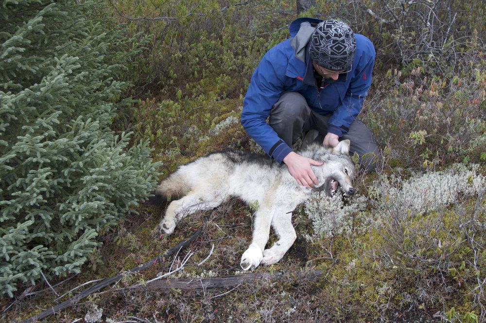 1 LUKE WOLF RESEARCH 1.jpg