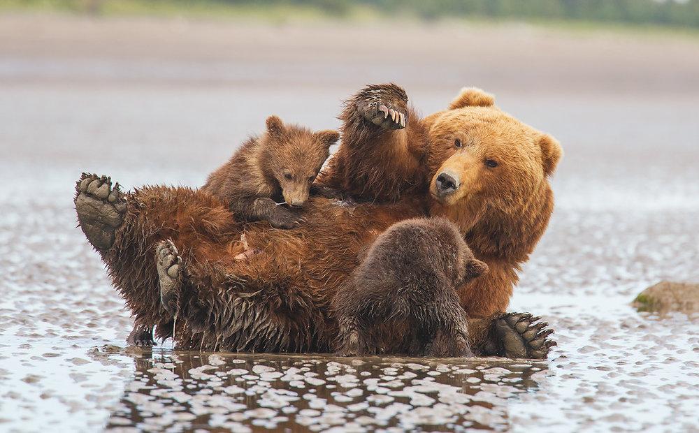 Nursing-Bears-IG.jpg