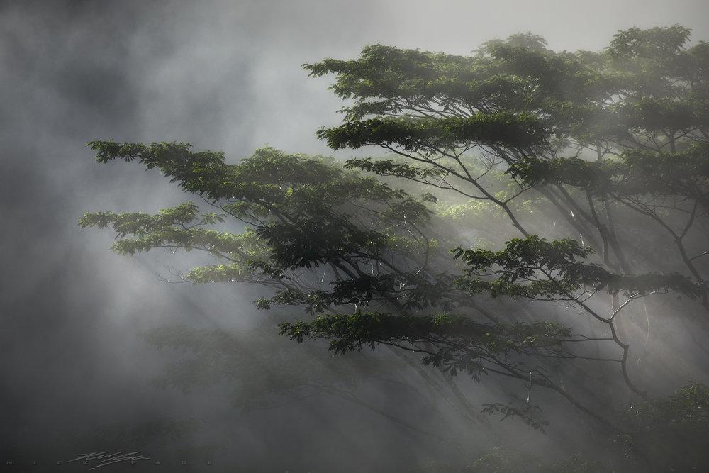 jungle-rays.jpg