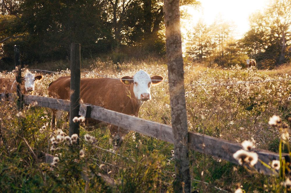 Regulation of Livestock Operations -