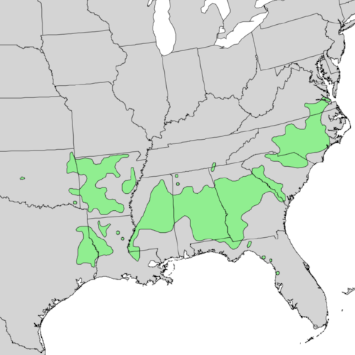 The range of Southern sugar maple ( Acer barbatum ). Growing as far south as Texas and Louisiana, it contains resilient genetics that could help northern sugar maple survive.