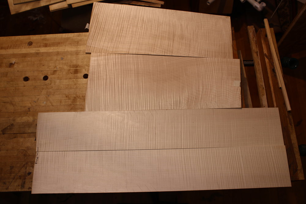 Flame Maple 1 -