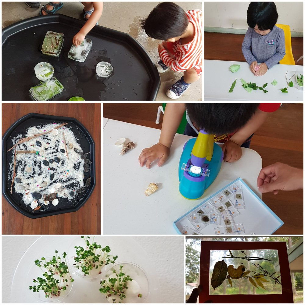 Nature play - plants and insects