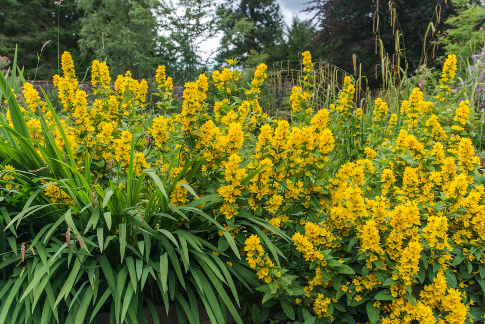 Glenfinnart-Walled-Garden-Ardentinny-Argyll-Forest-Park-2109.jpg