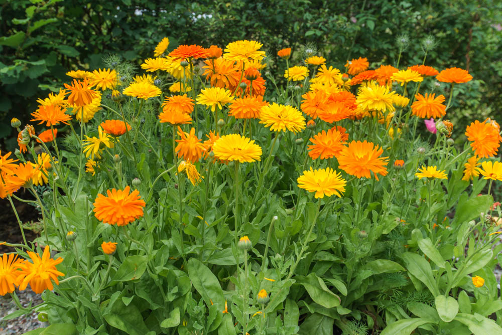Glenfinnart-Walled-Garden-Ardentinny-Argyll-Forest-Park-2076.jpg