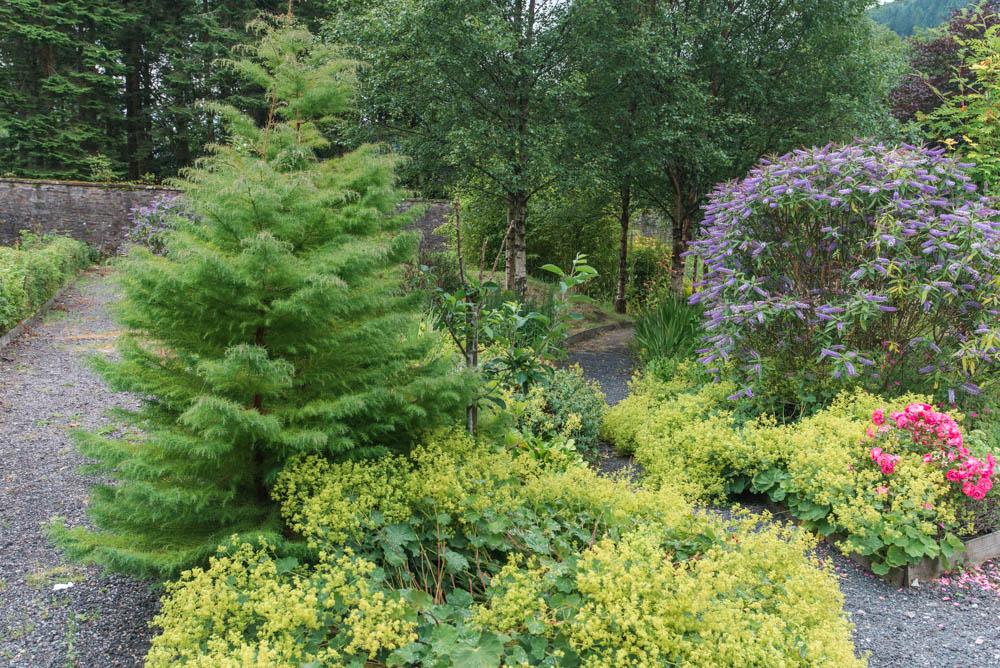 Glenfinnart-Walled-Garden-Ardentinny-Argyll-Forest-Park-2096.jpg