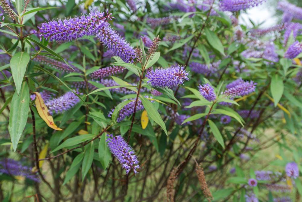 Glenfinnart-Walled-Garden-Ardentinny-Argyll-Forest-Park-2101.jpg
