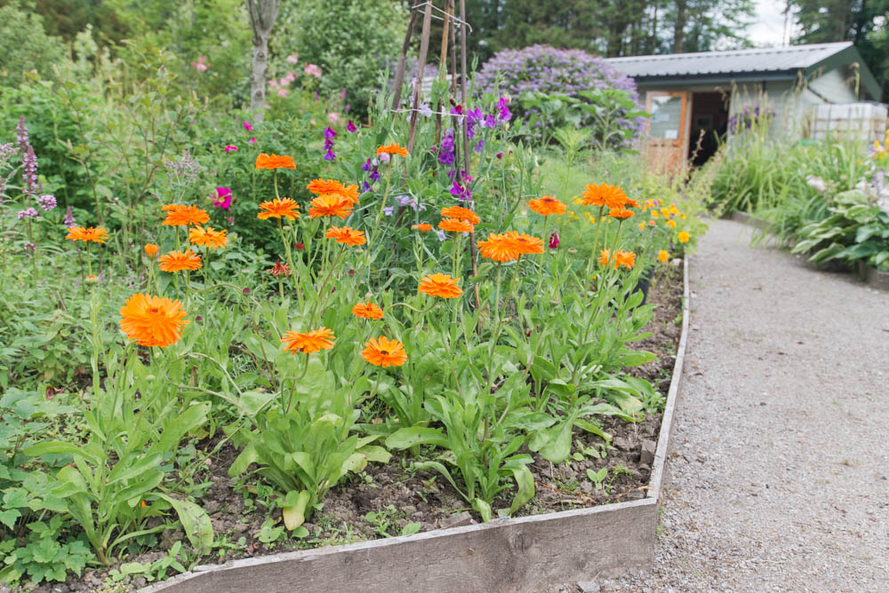 Glenfinnart-Walled-Garden-Ardentinny-Argyll-Forest-Park-2105.jpg