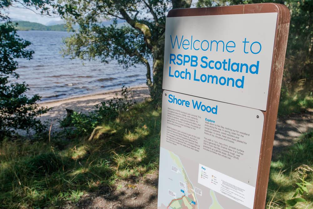 Shore Wood, Aber Shore, Loch Lomond