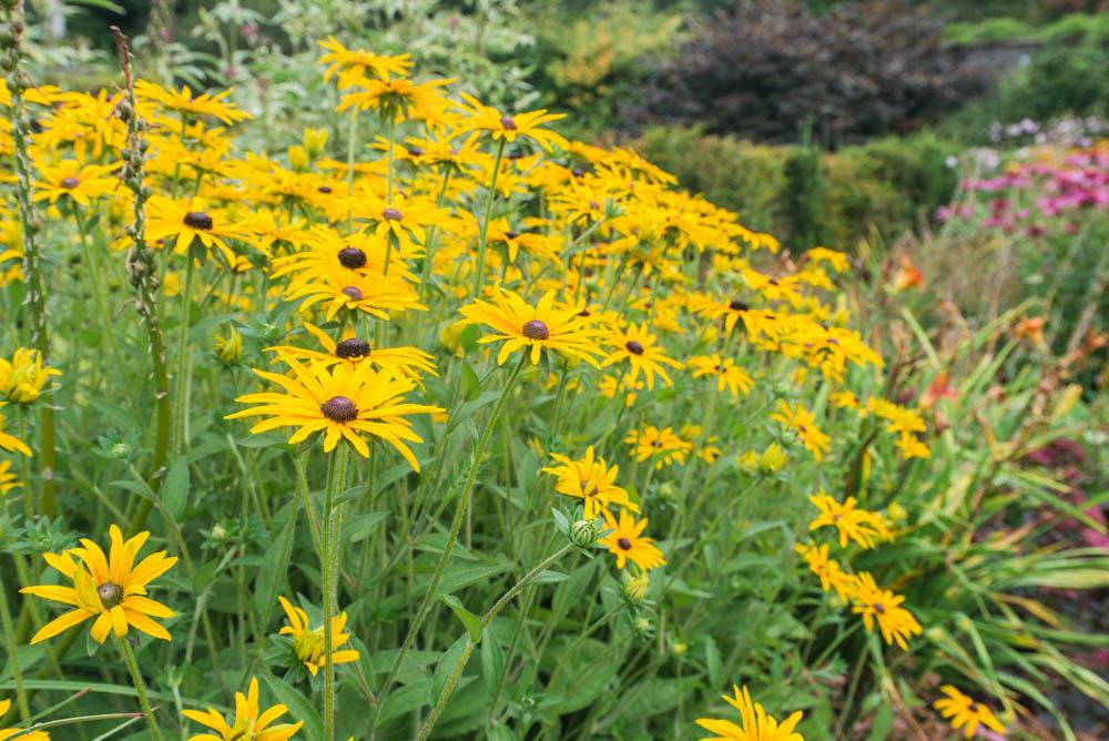 Walled-Garden-Balloch-Castle-Country-Park-3269.jpg
