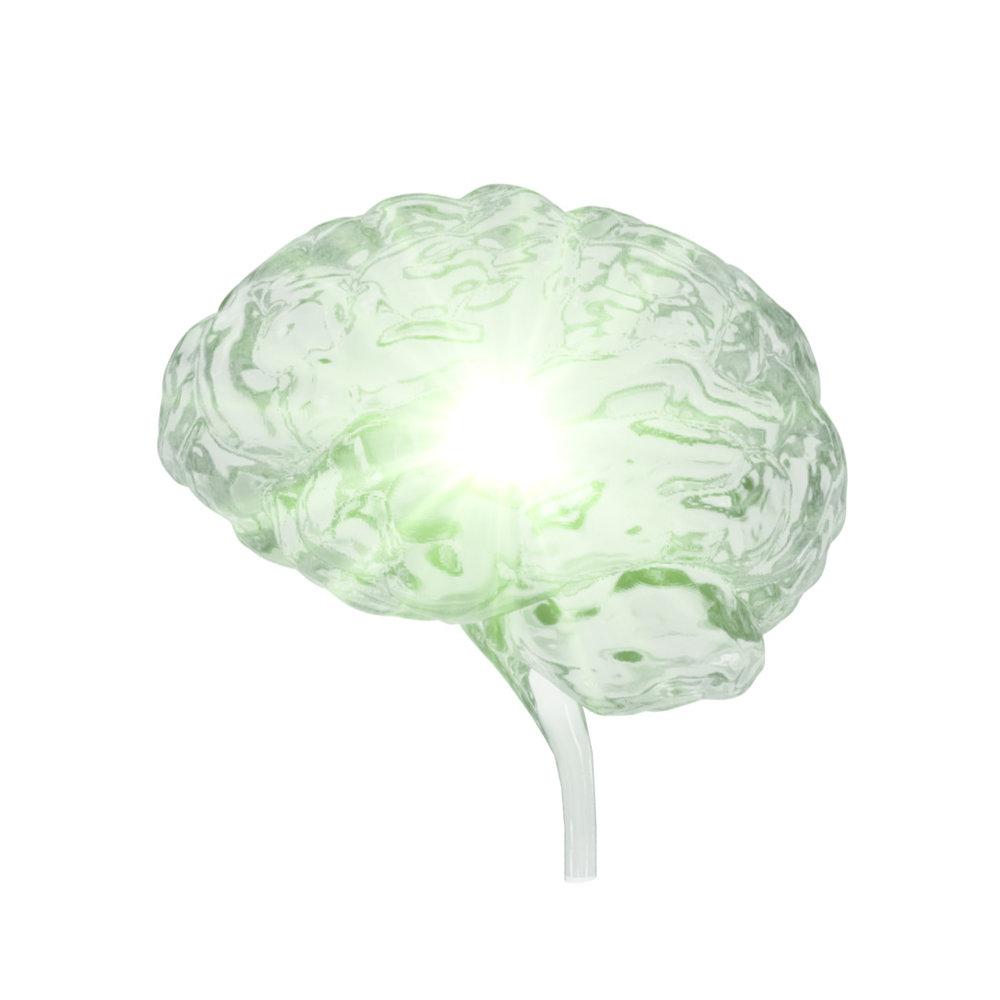 Brain (1).jpg