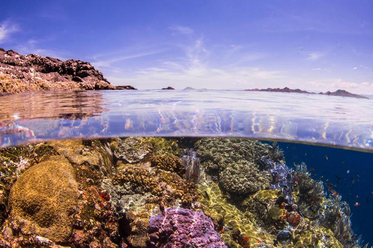 TVOF-Blog-Flores-Diving2.jpg