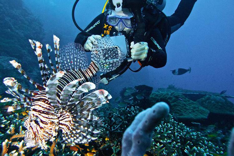 TVOF-Blog-Flores-Diving4.jpg
