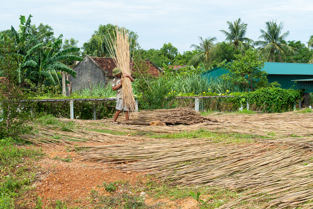 Bamboo-Farm-Jungle-Straws-Sustainable-Straw-Idea.jpg