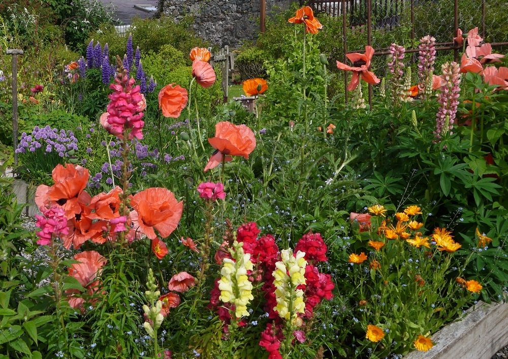 Poppies & snapdragons webs-min.JPG