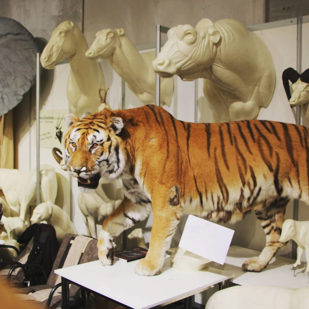 Sophia Tegel - Big Cat Seminar 2018.jpg