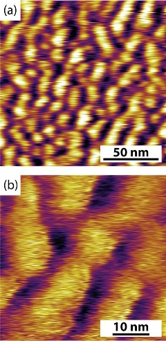 Figure 1 : (a) 150 x 150 nm and (b) 45 x 45 nm height image of polymer brush coated mica surface as imaged using the FM-AFM technique.