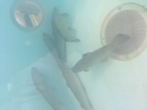 fish-300x225.jpg