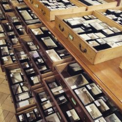 Photo of the Apocynaceae collection, a family exhibiting a rare evolution of dispersal mechanisms. Every box here has a story I want to tell.