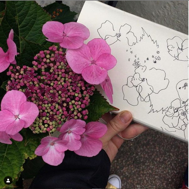 Hydrangea sp.,  blind contour drawing in Brighton.