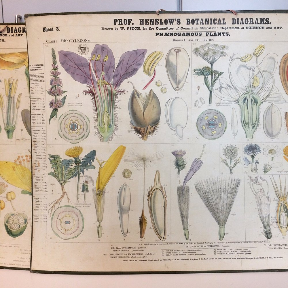 19th century botany professor John Henslow was Darwin's mentor & questioned Linnaean taxonomy, publishing wall charts that tackled systematic botany.