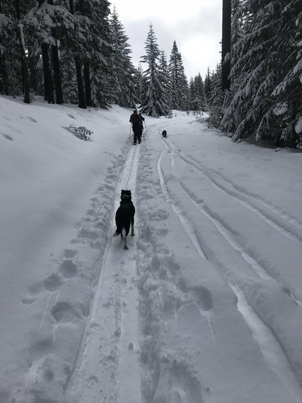 Greta following the pack - Potato Hill, Oregon