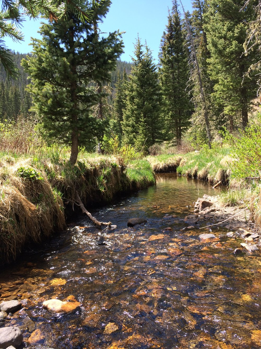 the catching spot - Pecos Wilderness, New Mexico