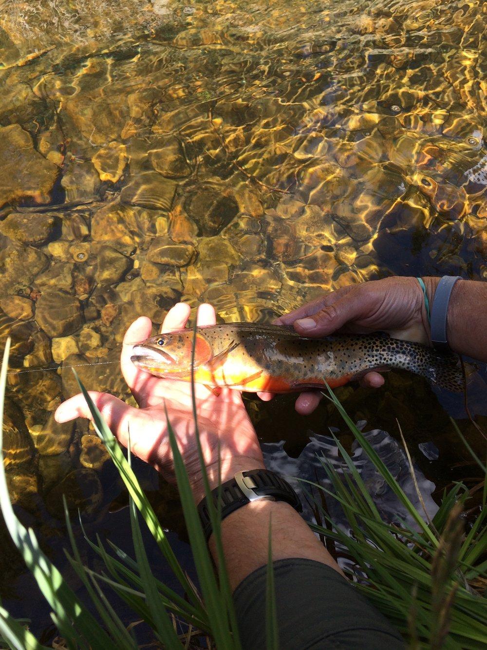 red chili trout - Santa Barbara River, New Mexico