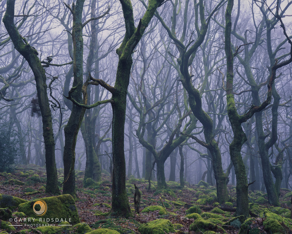 Spiral Forest - Peak District National Park, England.