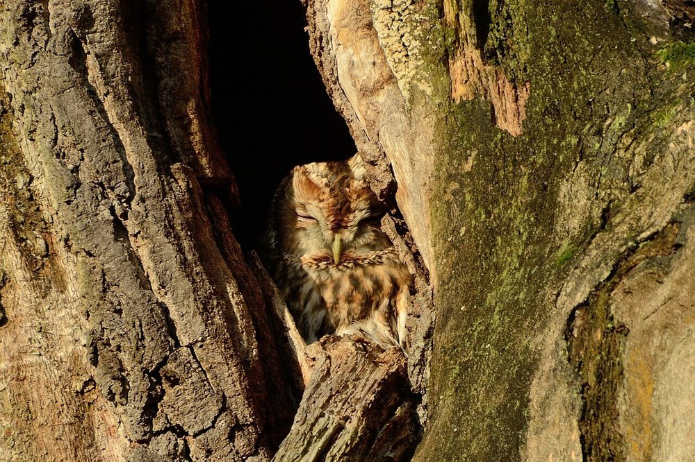 owl-1096364_1280.jpg