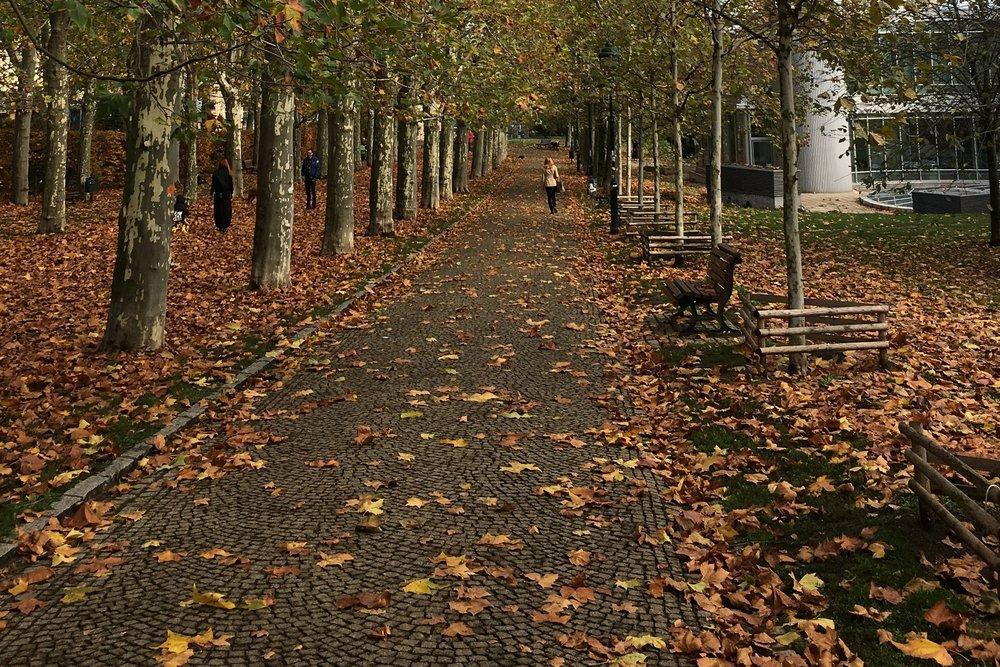 walking-trees-leaves.jpg