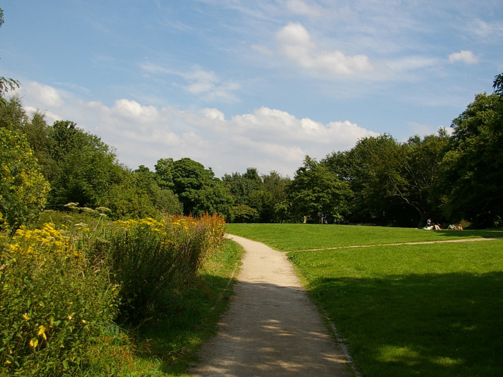sunny day over open space.jpg