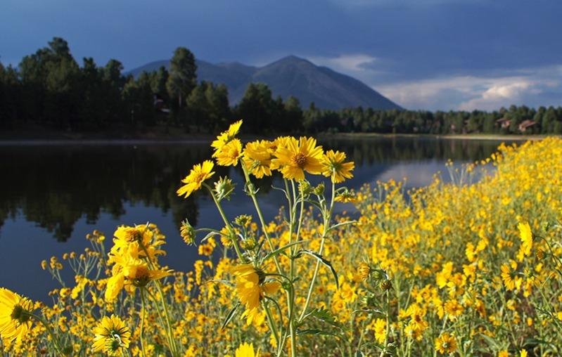 Flagstaff-Flowers-1.jpg