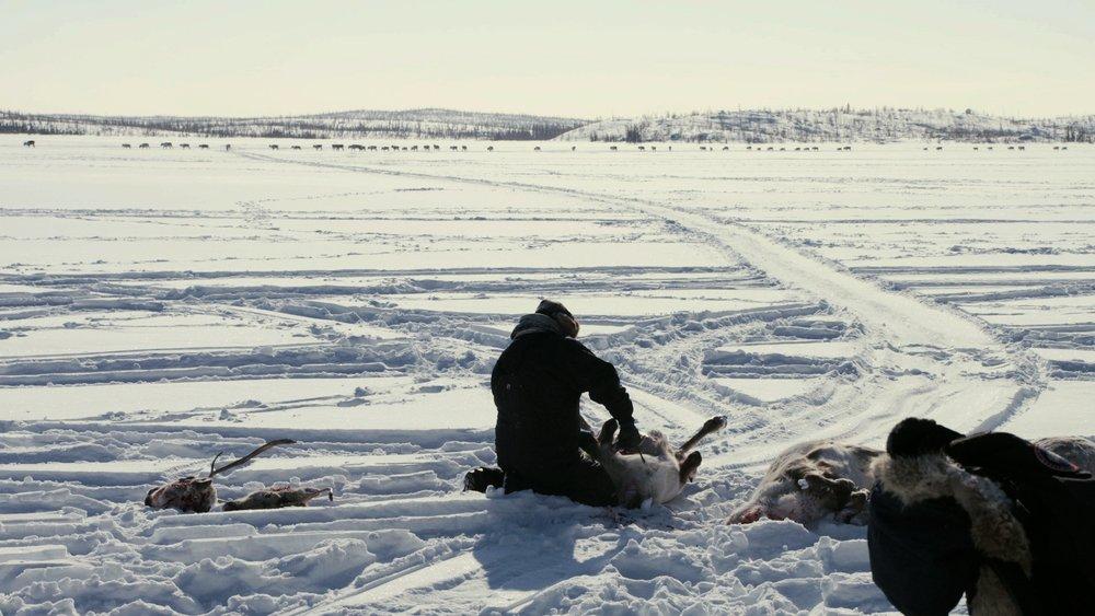 Déné hunter Freddie Throassie butchers a caribou.