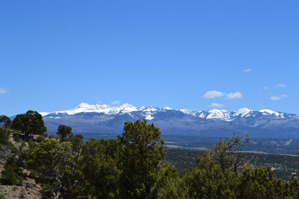 View of the La Platas through the Piñon–Juniper Woodlands in Cedar Mesa Ranches, Mancos.