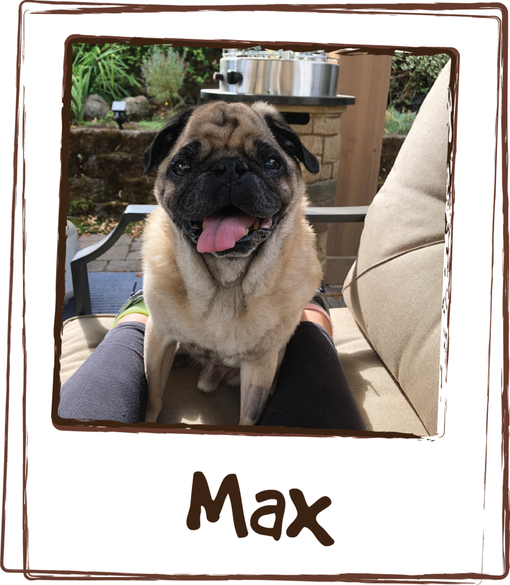 """Hi again! So when Mr. Max was younger I found out that he was allergic to over the counter food. I started making his food (brown rice and chicken) and after much searching found your Multi Viamin Feeding Aid. I wrote you and told you how please I was and you actually are using my Testimonial on the box! Well, Max is quite a bit older and recently it appeared that he was starting to wind down. I was heart broken watching him move with difficulty as well as learning that his heart was skipping beats and feared we may not have him for much longer. I started using the Joint + heart formula and within two weeks even my dog walker was telling me what did I do! Max is like a puppy again! Loving life and running around playing with his 11 month old Italian Mastiff Sister, who by the way also gets the Multi viamin feeding aid. I havent had his heart retested but I am sure it is helping with that as well. Once again, Thank you so much for providing these formulas.!! I have my little guy back happy and healthy!!"""