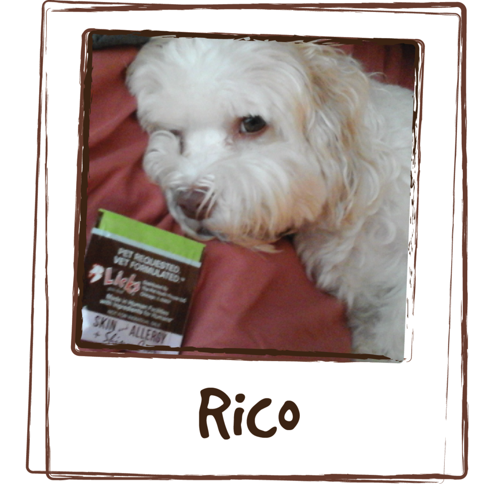 """Rico has skin allergy problem, he at times constantly scratch his body or licking his feet. We found licks allergy last month and Rico's symptoms start to improve. He is a very picky eater but he liked up the entire pack on the first try. Great product."""