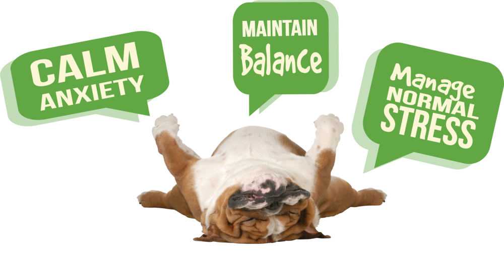 Dog Zen graphic R2.png